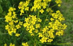 Flores da mola no jardim botânico Fotografia de Stock Royalty Free