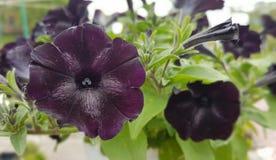Flores da mola no jardim botânico Foto de Stock Royalty Free