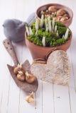 Flores da mola no potenciômetro Conceito da mola Fotografia de Stock Royalty Free