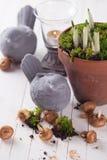 Flores da mola no potenciômetro Conceito da mola Fotografia de Stock