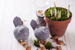 Flores da mola no potenciômetro Conceito da mola Imagens de Stock Royalty Free