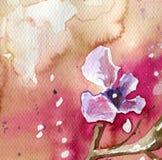 Flores da mola no prado imagens de stock royalty free