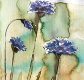 Flores da mola no prado foto de stock royalty free