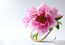 Flores da mola no vaso no fundo branco Fotografia de Stock Royalty Free