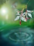 Flores da mola sobre a água Foto de Stock