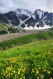 Flores da montanha Fotos de Stock Royalty Free