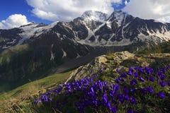 Flores da montanha Fotografia de Stock