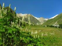 Flores da montanha Imagem de Stock Royalty Free