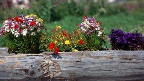 Flores da montanha foto de stock