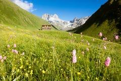 Flores da montanha no vale Picos de Chauhi Acampamento da montanha imagens de stock royalty free