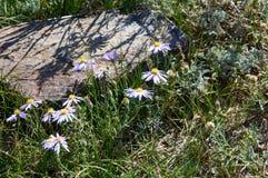 Flores da montanha perto do lago da montanha de Tuzkol Fotos de Stock Royalty Free
