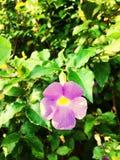 flores da natureza Fotos de Stock Royalty Free