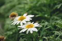 2 flores da natureza Fotografia de Stock Royalty Free