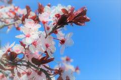 Flores da natureza fotografia de stock royalty free