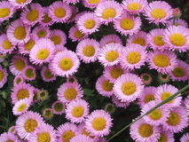 flores da natureza Foto de Stock