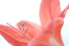 Flores da natureza da paisagem Imagens de Stock Royalty Free