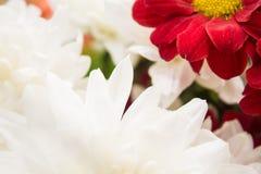 Flores da natureza da paisagem Imagens de Stock