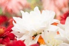 Flores da natureza da paisagem Foto de Stock Royalty Free