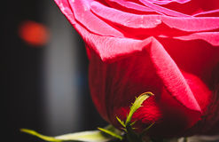 Flores da natureza da paisagem Fotos de Stock