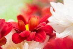Flores da natureza da paisagem Imagem de Stock Royalty Free