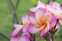 Flores da natureza do fundo Imagens de Stock