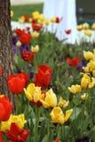 Flores da noiva fotografia de stock
