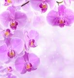 Flores da orquídea fotos de stock