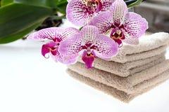 Flores da orquídea e folhas e toalhas do verde no fundo branco Imagens de Stock