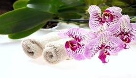 Flores da orquídea e folhas e toalhas do verde no fundo branco Foto de Stock