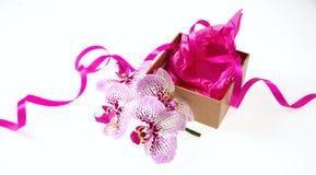 Flores da orquídea e presente pequeno com uma fita do cetim isolada no fundo branco Imagem de Stock Royalty Free