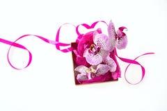 Flores da orquídea e presente pequeno com uma fita do cetim isolada no fundo branco Fotos de Stock Royalty Free