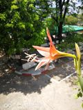 Flores da orquídea em um vaso colocado na parte dianteira do santuário imagens de stock royalty free