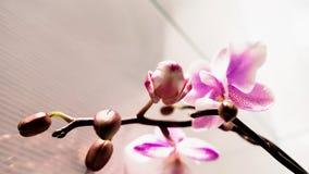 flores da orquídea 4K video estoque