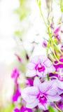 Flores da orquídea no jardim imagem de stock royalty free