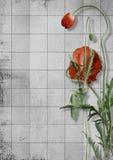 Flores da papoila em um fundo de papel cinzento Fotos de Stock