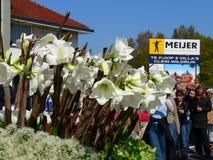 Flores da parada Fotografia de Stock Royalty Free