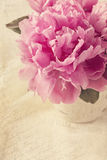 Flores da peônia Fotografia de Stock