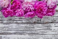 Flores 01 da peônia Fotografia de Stock Royalty Free