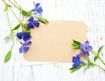 Flores da pervinca com cartão Imagem de Stock Royalty Free