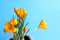Flores da plântula para plantar Imagens de Stock