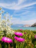 Flores da planta de gelo Imagens de Stock