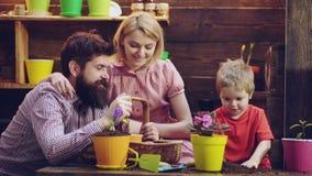 Flores da planta da família em uns potenciômetros Flores para a casa Os jogos das crianças com solo Fundo de madeira bonito A cri filme