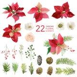 Flores da poinsétia e elementos florais do Natal - na aquarela Fotos de Stock Royalty Free