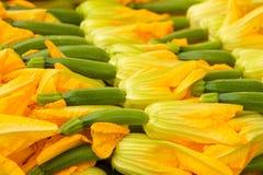 Flores da polpa Imagem de Stock