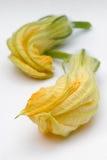 Flores da polpa ou flores da abóbora foto de stock royalty free