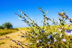 Flores da pradaria Foto de Stock Royalty Free