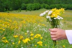 Flores da preensão da mão das crianças no prado da mola imagem de stock royalty free