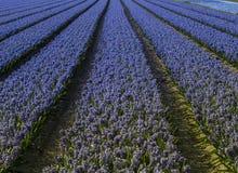 Flores da primavera Foto de Stock Royalty Free
