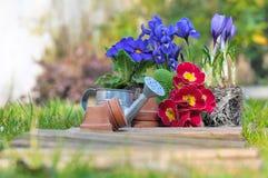 Flores da primavera Imagem de Stock Royalty Free
