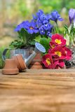 Flores da primavera Fotos de Stock Royalty Free
